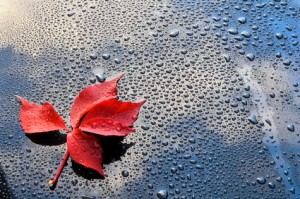 Water drops on car paint with red leaf