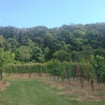 Mundklingen Weinberge am Wald