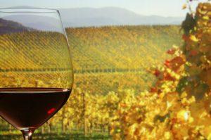 Weinbeschreibungen