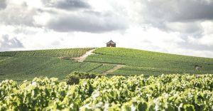 AR Lenoble-Weinbeschreibungen