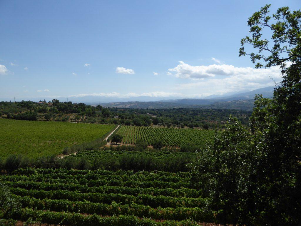 Weinland bei Ferrocinto